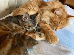 Барс и Самина спят  держатся за лапки 23.04.2020