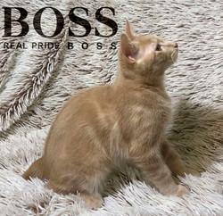 boss_9