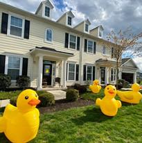 yard ducks 1.jpg