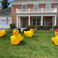 Ducks Flom.jpg