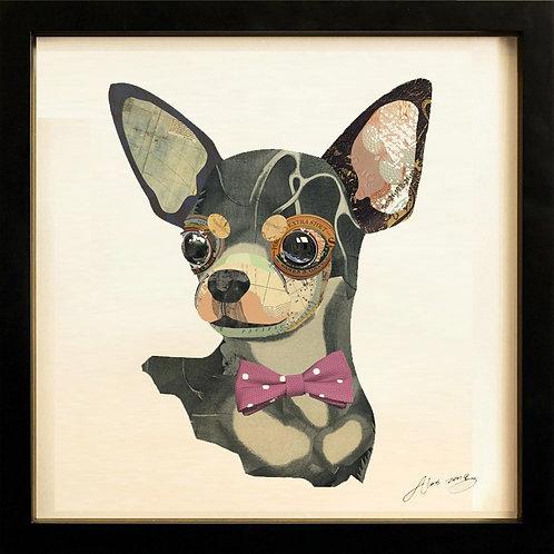 Chihuahua Closeup - DAC-082