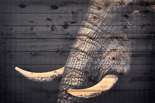 Elephant- ADL-EAD2258-3045