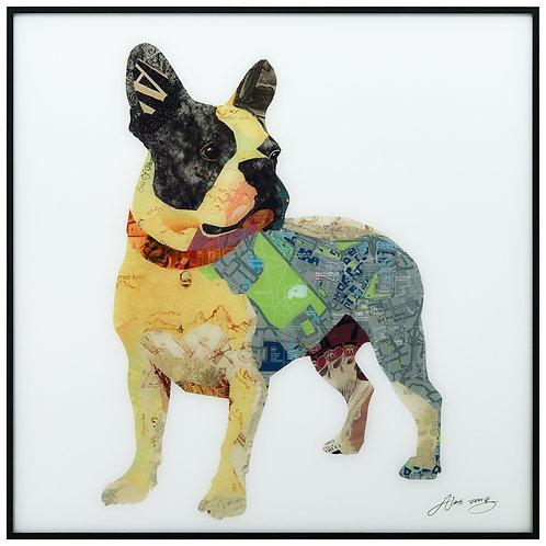 Boston Terrier 1 - AAGB-AZ049-2424