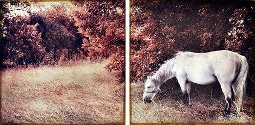 White Horse - Set of 2 - FRE-EAD1187