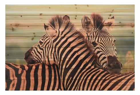 Zebras- ADL-EAD3364-3045