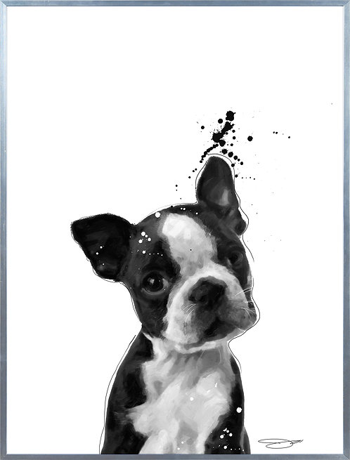 Boston Terrier - AAGS-JP1042-2418
