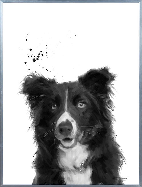 Border Collie - AAGS-JP1022-2418