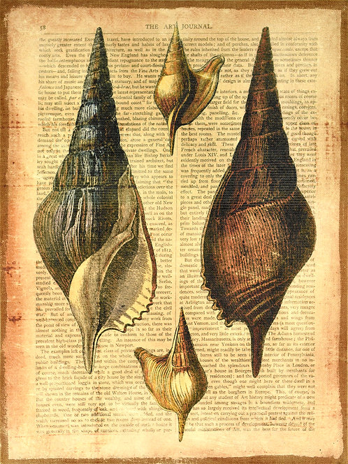 Antiquarian Shells 2 - FRE-63710