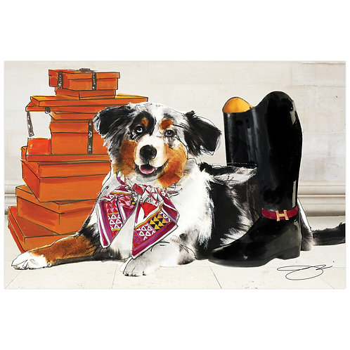 Ride in Style Border Collie: TMP-JP1052-1624