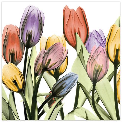 Tulip Scape I - TMP-AK024A-2424