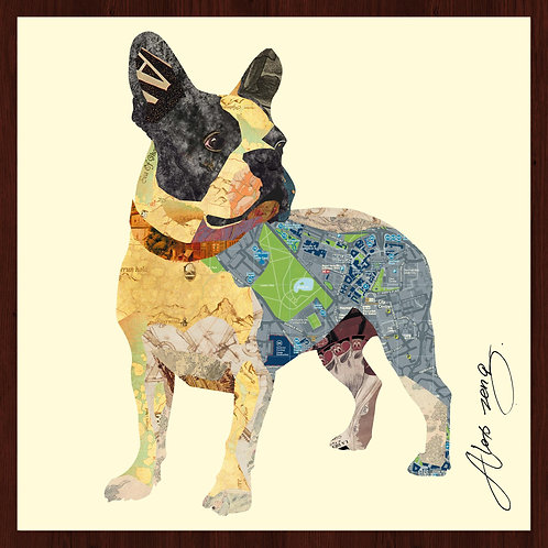 Boston Terrier 1 - DAC-049