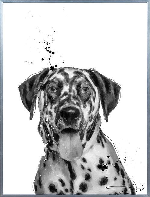 Dalmatian - AAGS-JP1032-2418