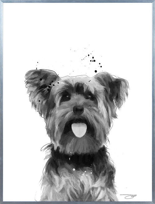 Yorkshire Terrier - AAGS-JP1034-2418