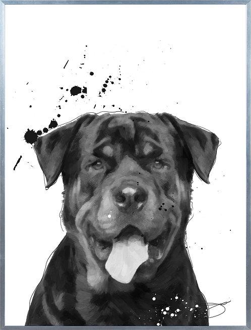 Rottweiler - AAGS-JP1045-2418
