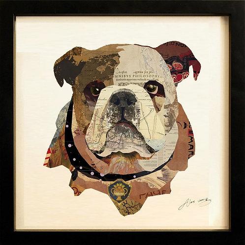 English Bulldog Closeup - DAC-081