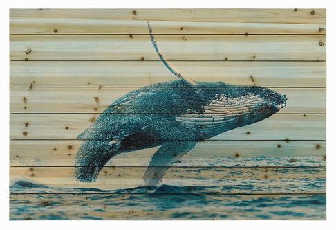 Whale- ADL-EAD1758-3045