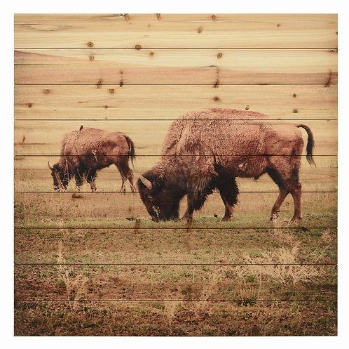 Bison- ADL-EAD1720-3636