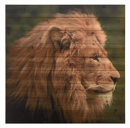 Lion 2- ADL-EAD4129-3636