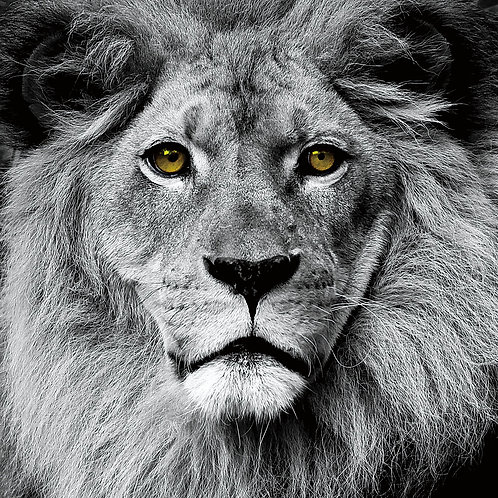 King of the Jungle - TMP-60913