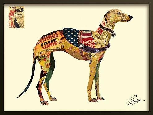 Greyhound - DAC-230