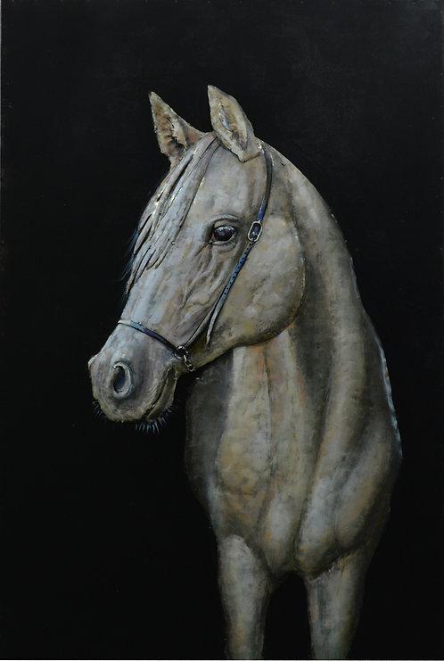 White Stallion - PMO-180134-4832