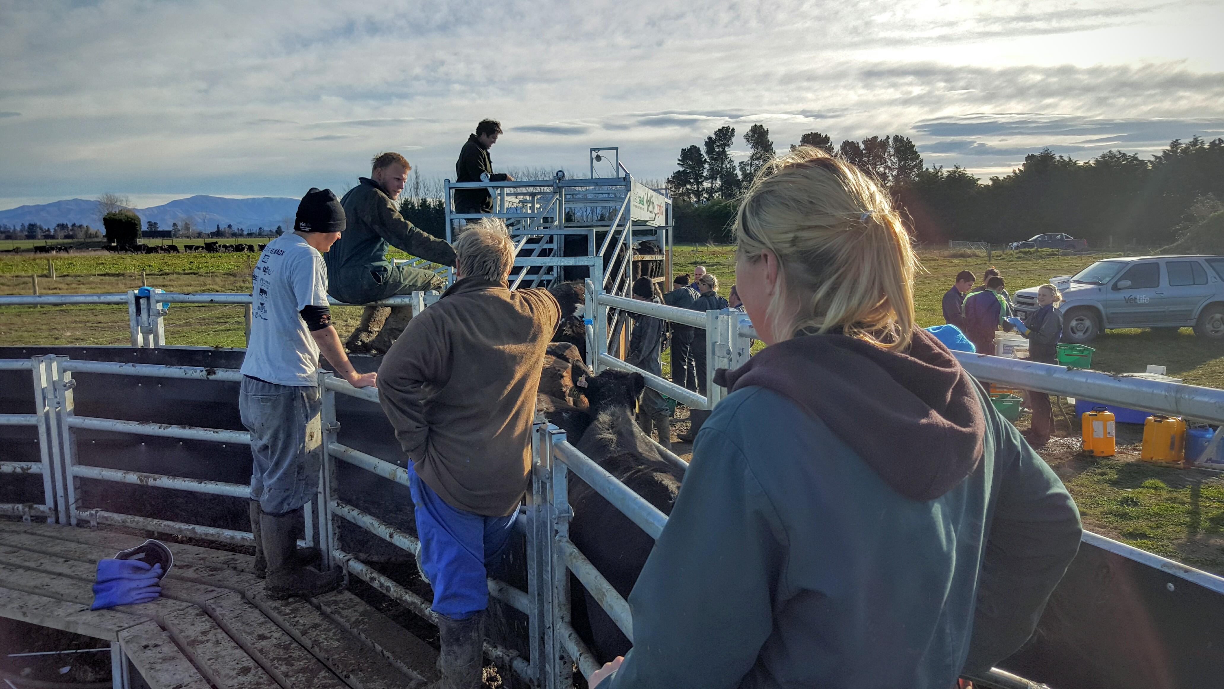 Millennium Farming - Kintore Farm