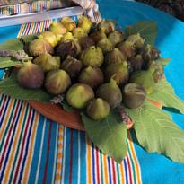 Récolte et dégustation de figue