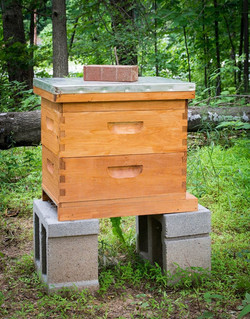 Our Honeybee Hive