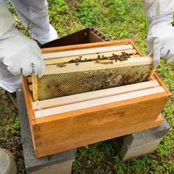 Beehive frames