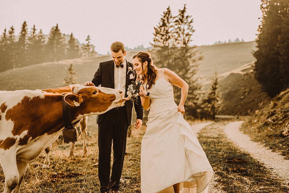mariés vache suisse fribourg fleur drôle