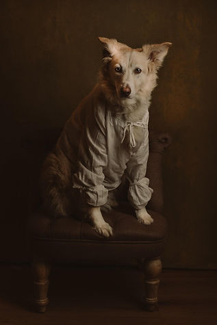 shooting photo fine art inspiré par les tableaux de maîtres clair-obscur,  chien portrait créatif photoshoot