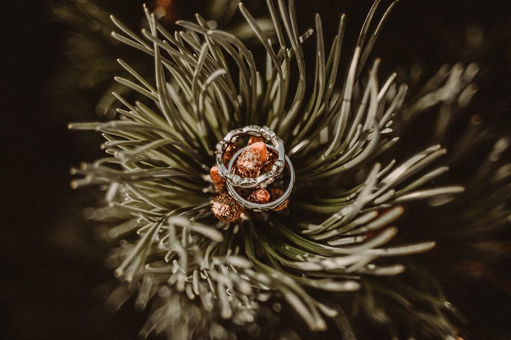 Photo bagues mariage sapins nature romantisme fribourg suisse