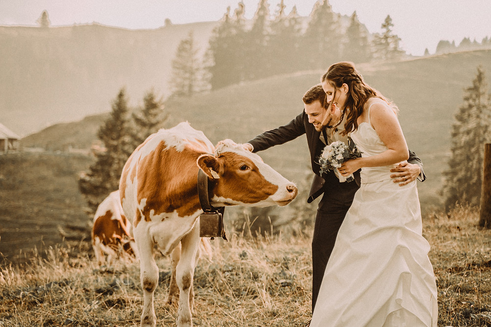 Berghaus Gurli mariage balancoire suisse montagne panorama ceremonie invites joie rire photographe mariage fribourg suisse montagne ceremonie cadeau invités photos de couples baiser vache soleil chalet