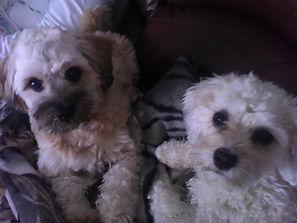Toby and Nala.jpg