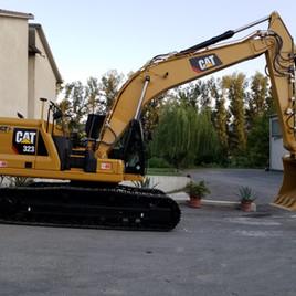 cat 323.jpg