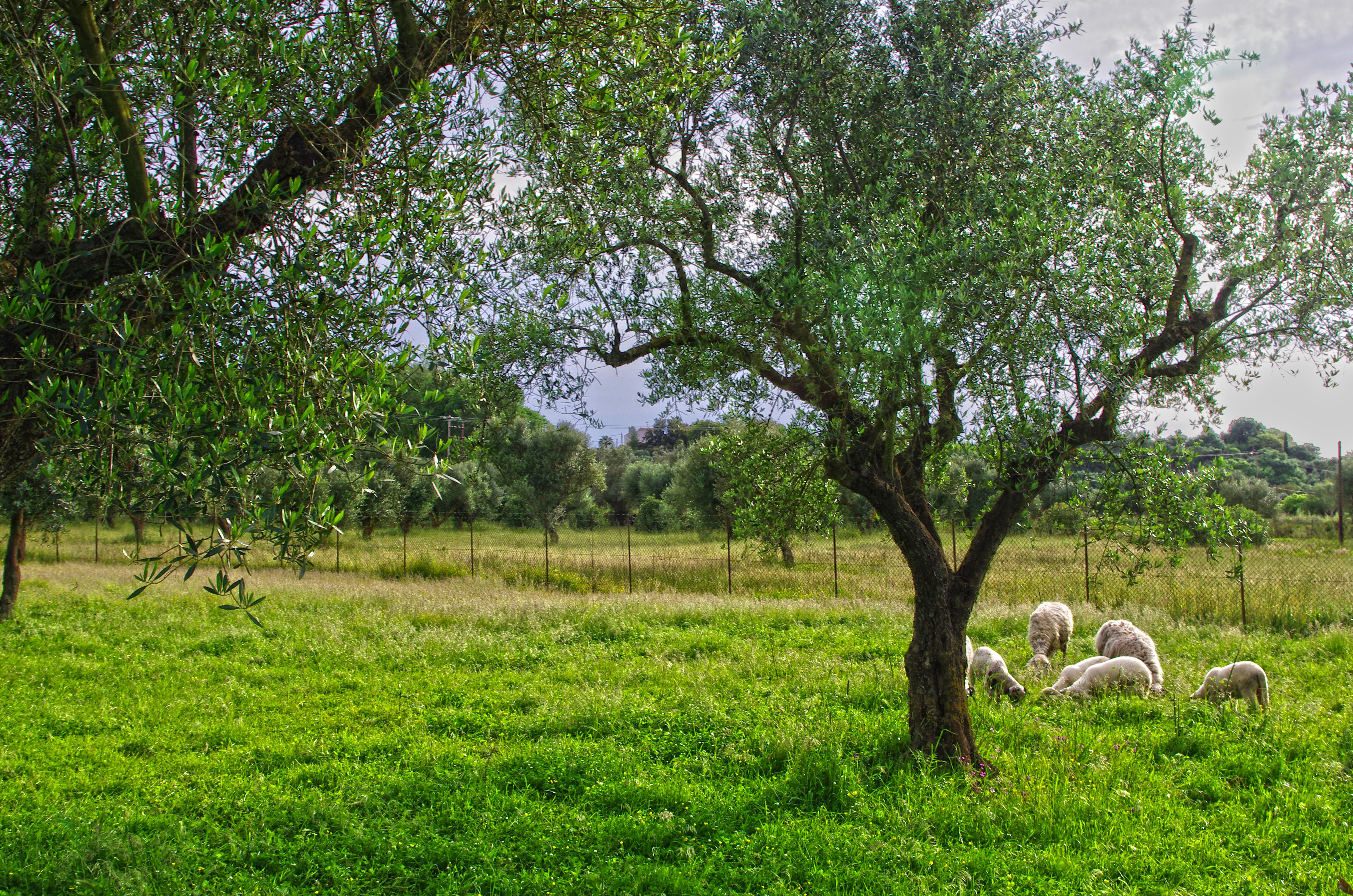 Olive groves full of life!