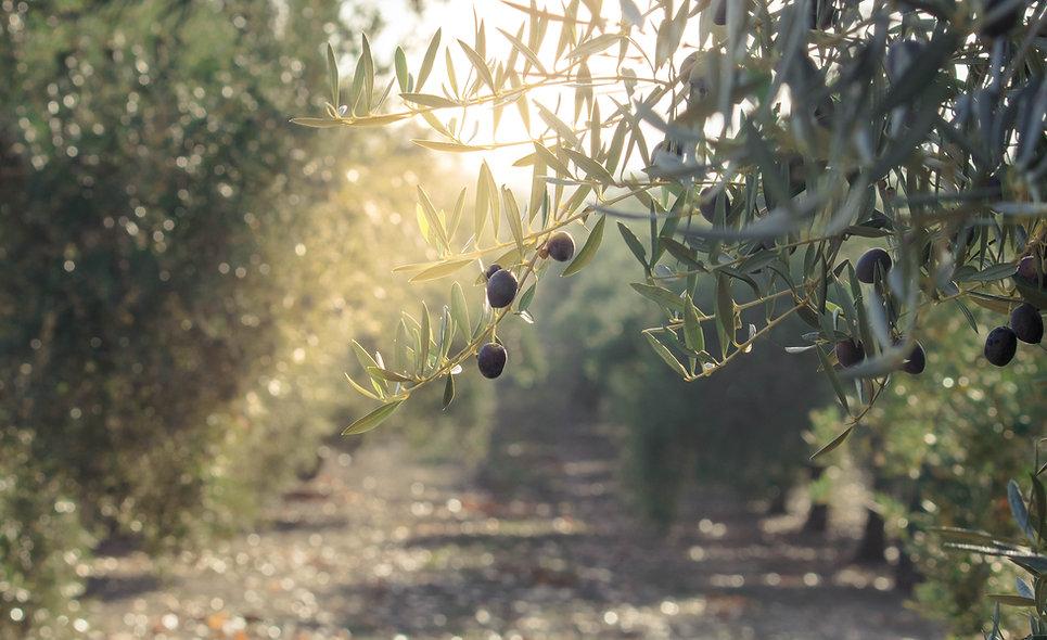 PJ Kabos_Greek extra virgin olive oil_aw