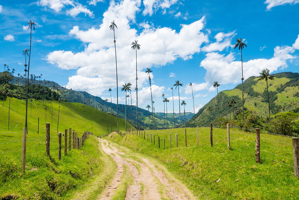 valley path Cocora Salento Colombia.jpg