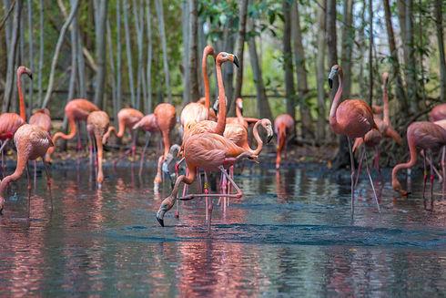 08. National Aviary - Flamingos.jpg