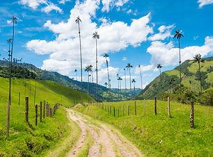 cocora valley .jpg