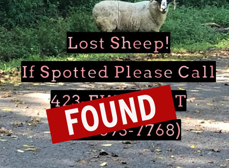 Have YOU seen this EWE?