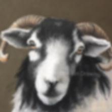Herdwick Fin Art Paste Drawing