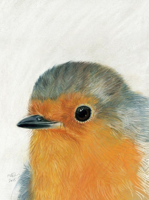 Little Robin Red Breast- Limited Edition Print