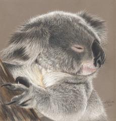 Hope- Koala.JPG
