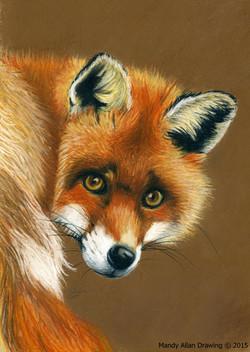 """Fox-backwards Glance"""