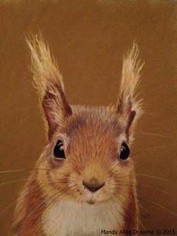 """British Red Squirrel"""