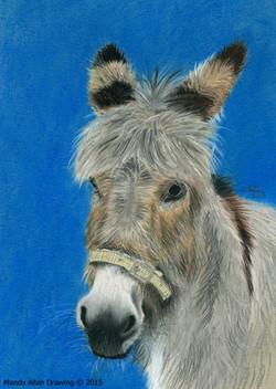 """""""Mo The Donkey"""""""
