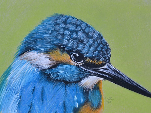 Kingfisher - Limited Edition Print