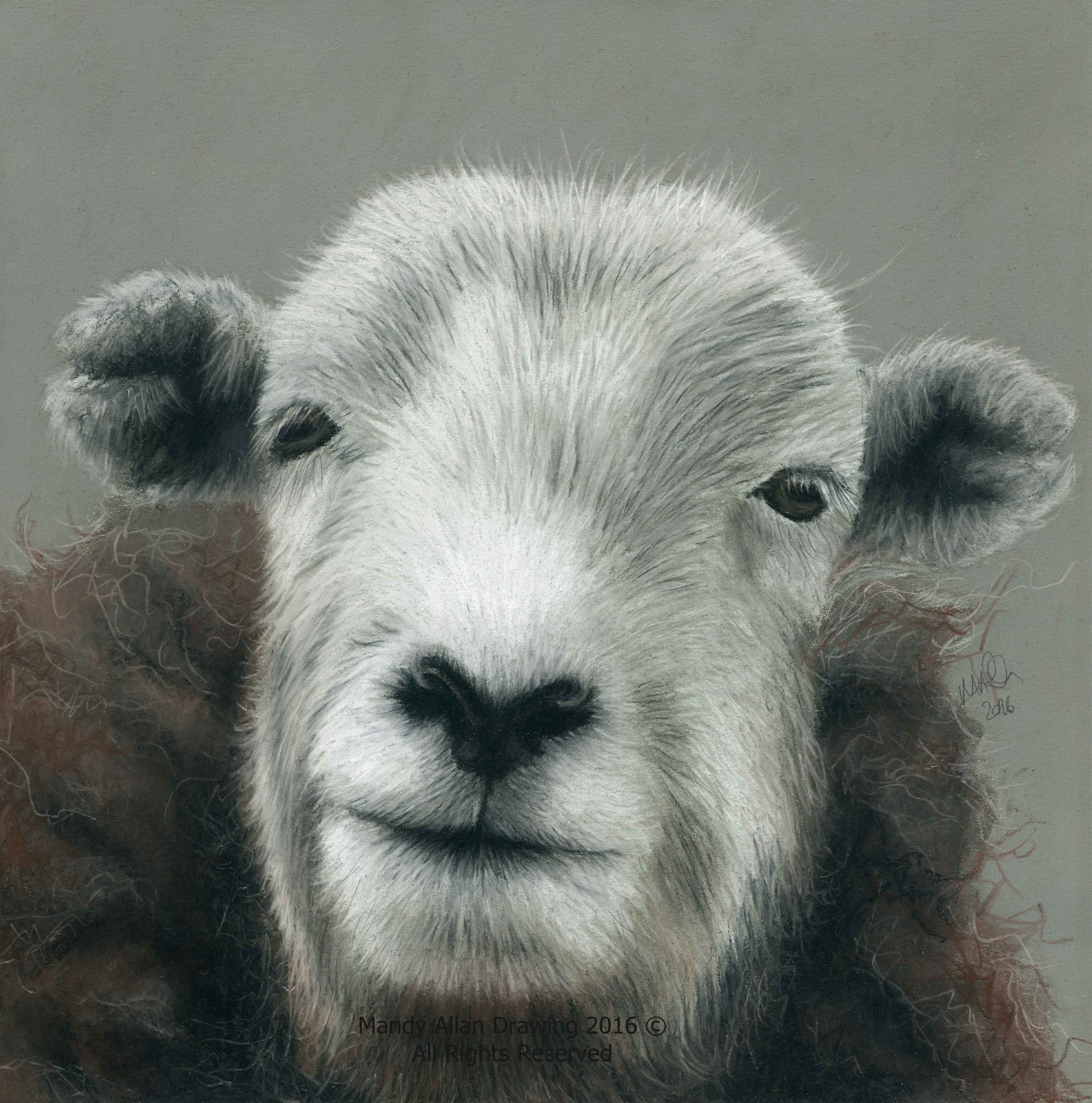 """Herdwick Ewe at The Riddin"""