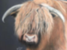 Highland Bull Fine Art Pastel Drawing